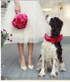 1 skylos gamos dog wedding - Κατοικίδια ζώα στο γάμο σας