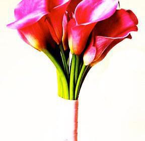 calla lillies kales gamos nifi mpouketo 288x280 - Γιατί να διαλέξετε κάλες (Calla Lilies) για το γαμήλιο μπουκέτο σας