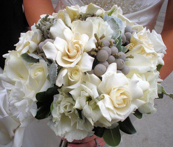 gardenia_anthodesmi-gamos