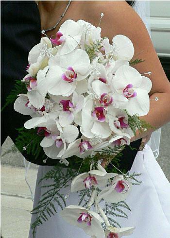 phalaenopsis-bouquet-gamos