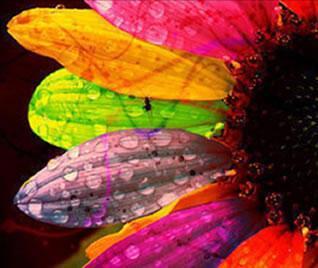 xromata gamos - Τα χρώματα στο γάμο και τι αποπνέουν