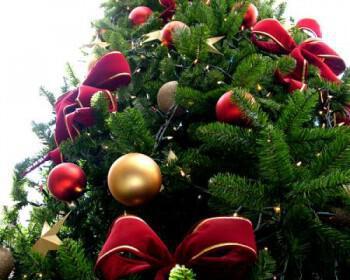 Christmas tree sxc hu 350x280 - Οι «τάσεις» στα Χριστουγεννιάτικα Δένδρα