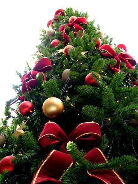 Christmas tree sxc hu - Οι «τάσεις» στα Χριστουγεννιάτικα Δένδρα