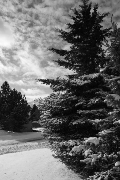 snowtree2 - Οι «τάσεις» στα Χριστουγεννιάτικα Δένδρα