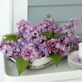 louloudia pasxa diakosmisi Lilac fb 160x160 - Πασχαλινή διακόσμηση : Πασχαλιά η μαγευτική…