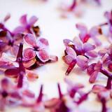 louloudia pasxa diakosmisi lilac flowers 10 160x160 - Πασχαλινή διακόσμηση : Πασχαλιά η μαγευτική…