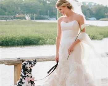 skili sto gamo 6 350x280 - Πως θα συμμετέχει το σκυλί σας στο γάμο σας