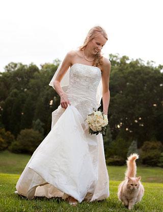 katoikidio gata gamos pet wedding