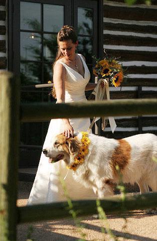 katoikidio skilos gamos pet wedding